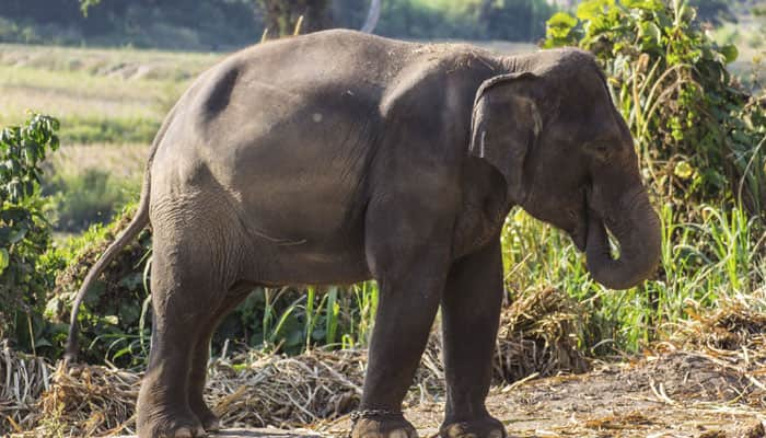 India to get its first elephant sanctuary near Bengaluru