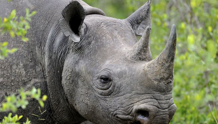 Assam Governor expresses concern over rhino poaching