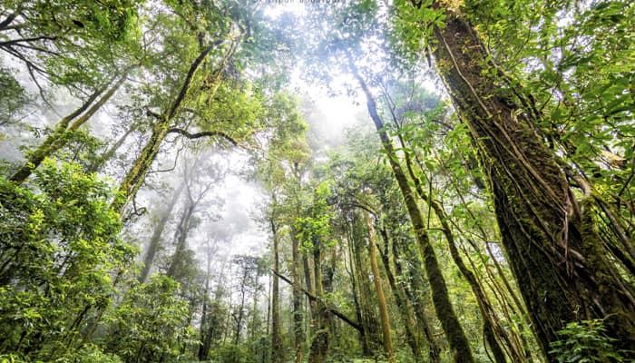 Humans adapted to rainforest environment sooner than previously believed