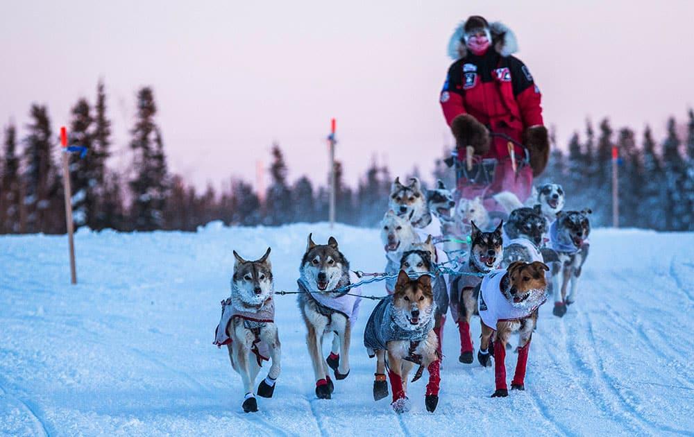 Aliy Zirkle and her team arrive at the Huslia, Alaska, checkpoint for the Iditarod Trail Sled Dog Race.