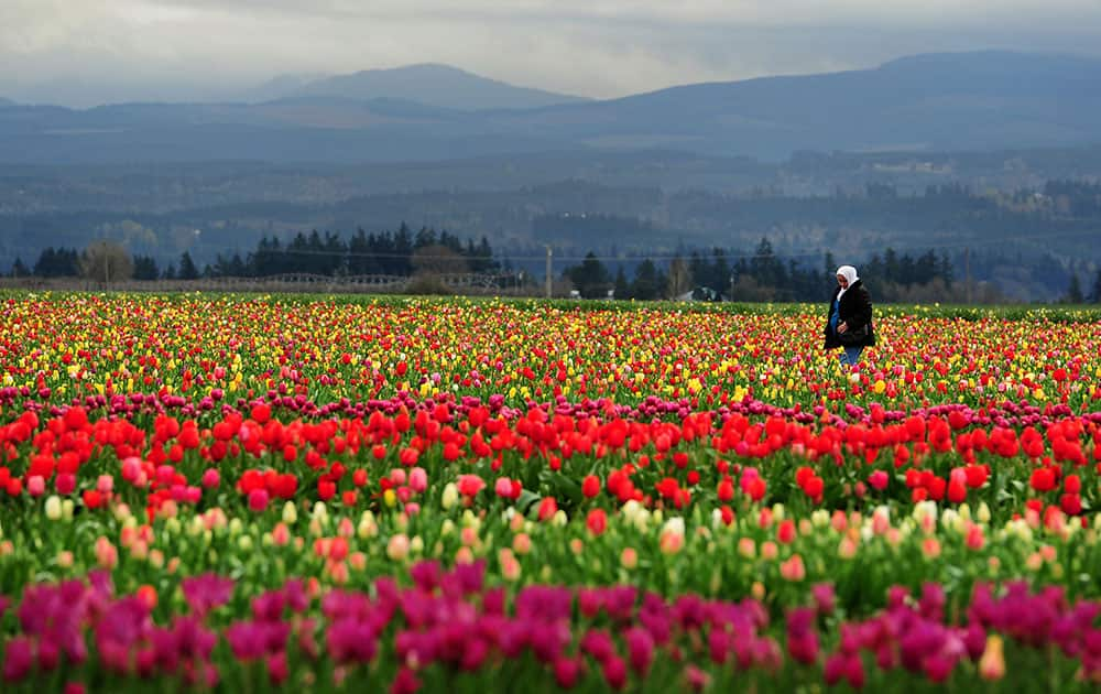 Dalal Murad, from Jordan, walks through fields of tulips while visiting with her family during Tulip Fest at the Wooden Shoe Tulip Farm, in Woodburn, Ore.