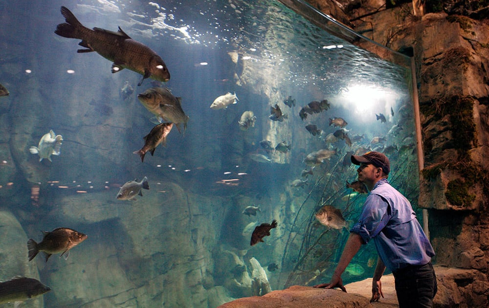 Raulin Forst looks over an aquarium in the new Bass Pro Shop store in Memphis, Tenn. Forst oversees the live exhibits in the store, which include 1,800 fish.