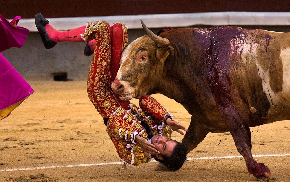 Bullfighter Leonardo San Sebastian is gored by a bull during a bullfight at Las Ventas bullring in Madrid, Spain.