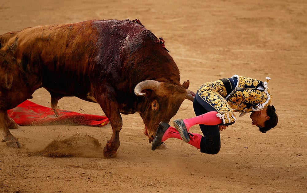 Spanish bullfighter Paco Urena is gored by a Pedraza de Yelte's ranch fighting bull during a bullfight at Las Ventas bullring in Madrid.