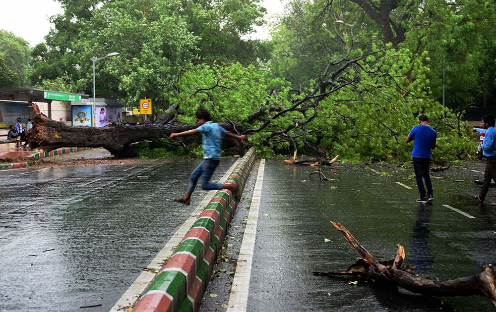 A tree falls on a road during a storm accompanied by shower in New Delhi.