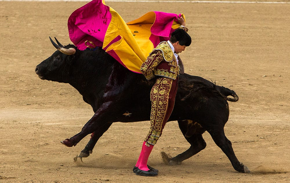 Bullfighter Tomas Angulo performs with a fighting bull during a bullfight at Las Ventas bullring in Madrid, Spain.