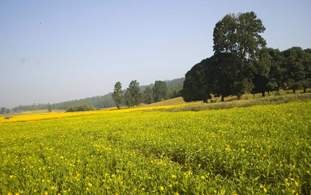 Mainpat - Pic Courtesy: Chhattisgarh tourism