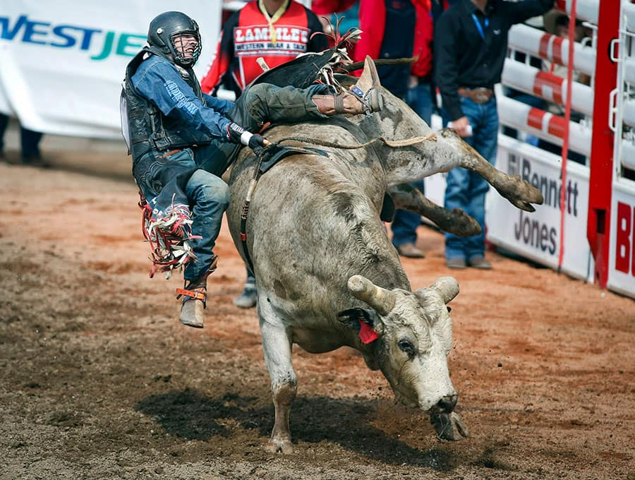 Tanner Byrne, from Prince Albert, Sask., comes off Silence Reins during Calgary Stampede bull riding rodeo action in Calgary.