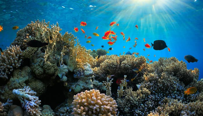 Abu Dhabi sets up coral reef monitoring stations