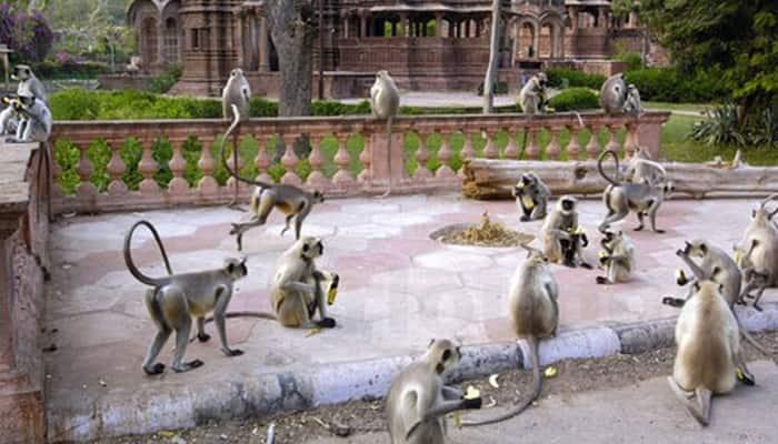 Shocking! Money rain at Vrindavan's Banke Bihari temple