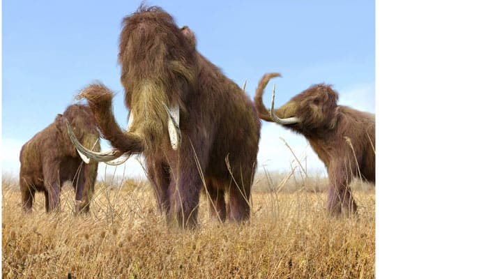 Mighty mammoths went extinct due to warming Earth