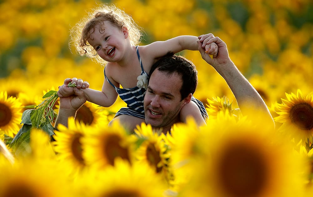 Rawly Stanhope walks with his daughter Cambrin, 3, through a sunflower field near Lawrence, Kan.