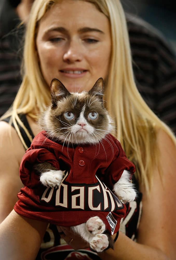 Owner Tabatha Bundesen holds Grumpy Cat, an Internet celebrity cat whose real name is Tardar Sauce, before a baseball game between the Arizona Diamondbacks and the San Francisco Giants.