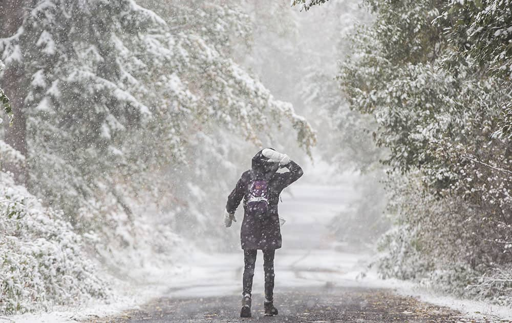 Snow falls as a hiker walks through the wintry forest on Grosser Feldberg peak in the Taunus mountains near Frankfurt, central Germany.