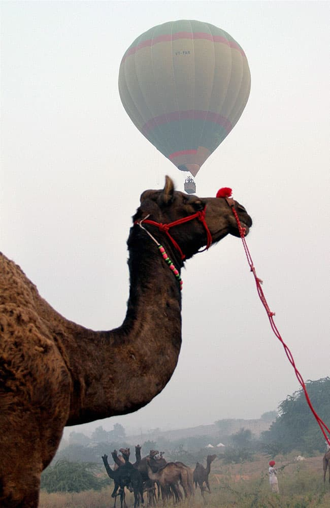 A hot air balloon rides during the worlds largest camel fair in Pushkar, Rajasthan.