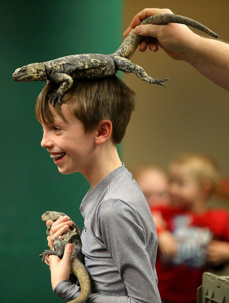 John Comey holds a chuckwalla lizard while Richard Ritchey places another chuckwall on his head at the Springfield Public Library in Springfield, Ore.