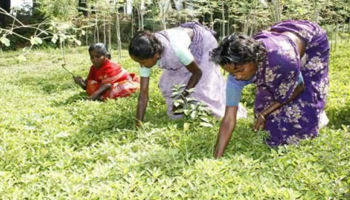 Retail inflation for farm, rural workers ticks up in November