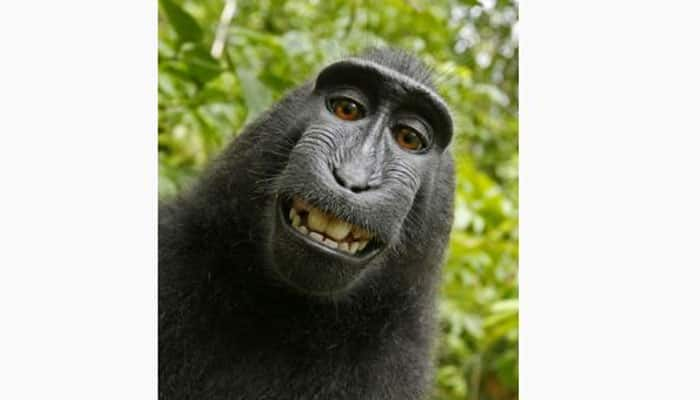 Monkey does not own copyright to his selfie: US judge