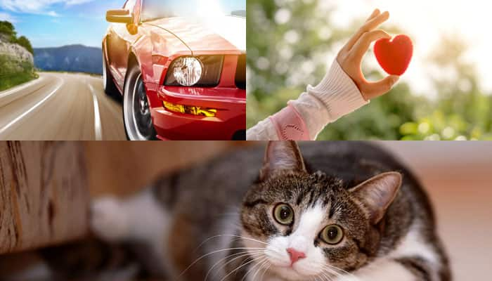 Indians searched for love, preferred car over job and cat over girlfriend in 2015