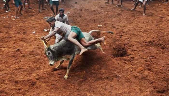 Centre lifts ban on Jallikattu - bull taming sport of Tamil Nadu
