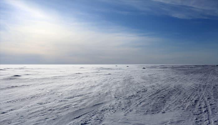 Moonlight drives marine creatures in Arctic winter