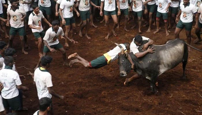 What is Jallikattu - 5 things that make it controversial
