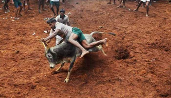 SC refuses to vacate stay on Centre's notification allowing Jallikattu in TN