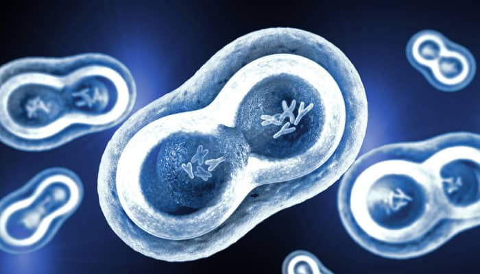 Science behind XY and XX chromosomes in human being