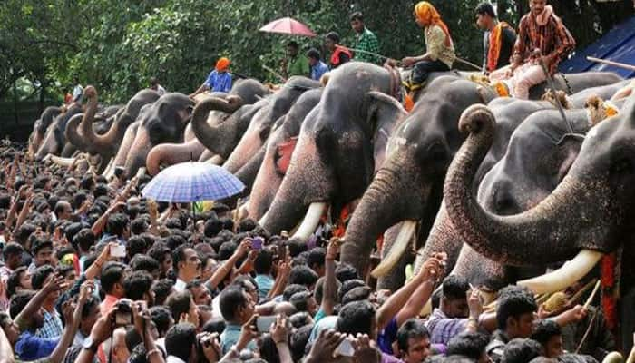 Debate over use of elephants at Sabarimala shrine reignites after tusker kills another devotee