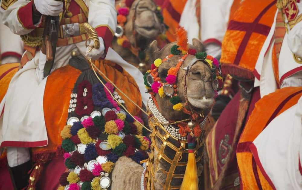 A decorated camel from the camel mounted contingent of Border Security Force (BSF) is seen at the Republic Day parade in New Delhi.