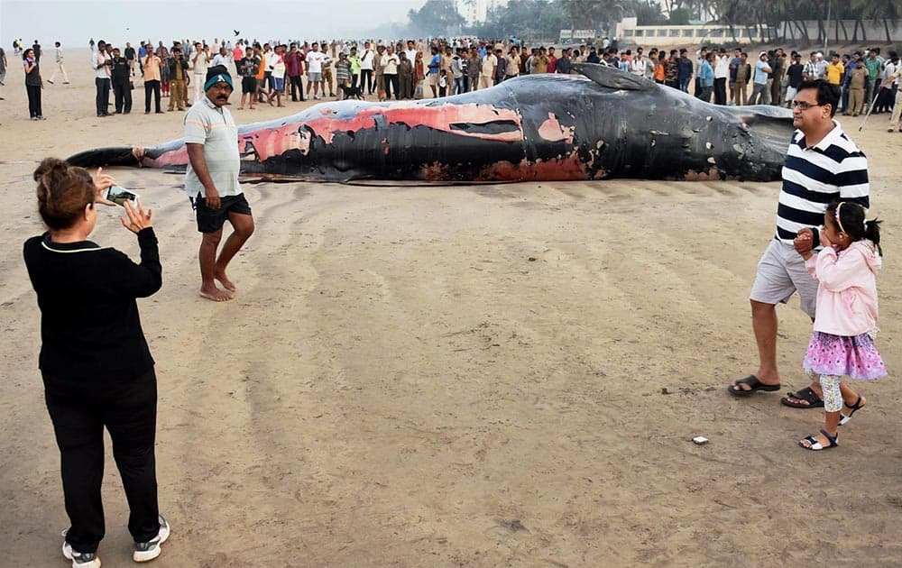 A 30-foot-long dead whale washed ashore at Mumbai's Juhu beach.