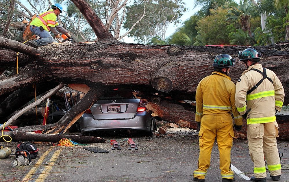 Firefighters work to remove a large tree that fell across multiple lanes of traffic, killing a motorist, in Pacific Beach, Calif.