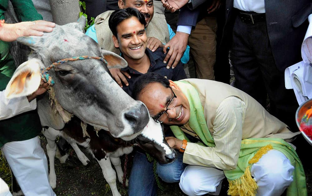 MP Chief Minister Shivraj Singh Chouhan poses with a cow during a programme organised by Bharatiya Kisan Sangh, in Bhopal.