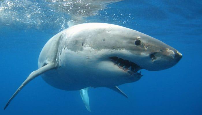 Humans may one day grow new teeth like sharks