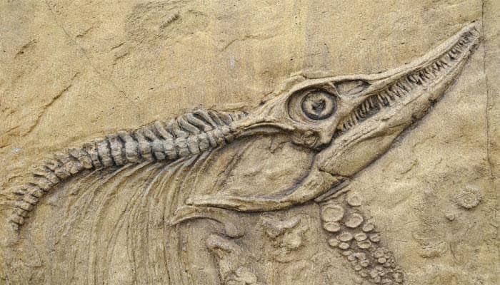 New dinosaur fossil found in Japan