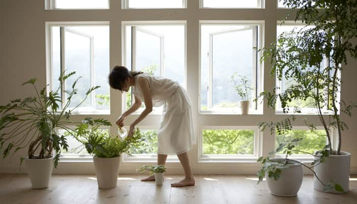 Flush in positivity in your home with vibrant flowers and plants!