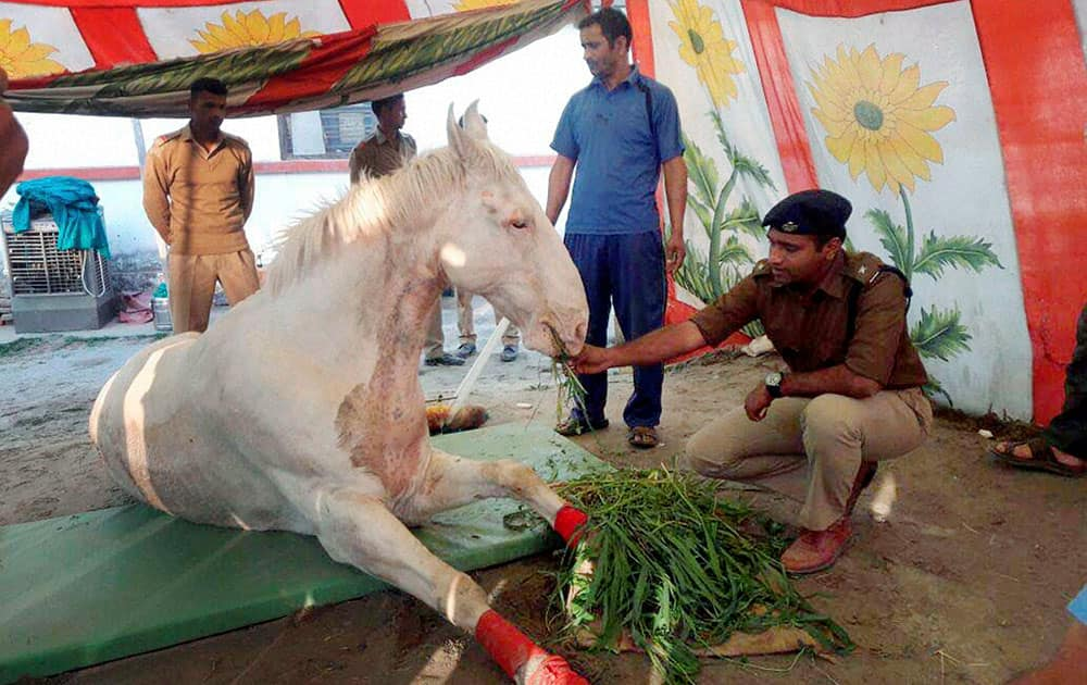 A police man feeds the horse that was injured in a protest at Police Line in Dehradun.