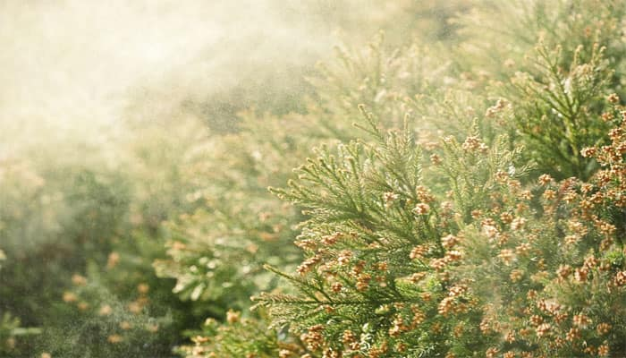 Is climate change making you more allergic?