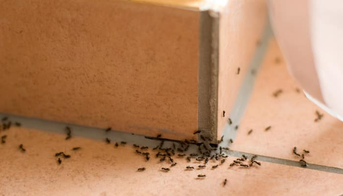 How to keep ants at bay without using harmful chemicals? Watch this video