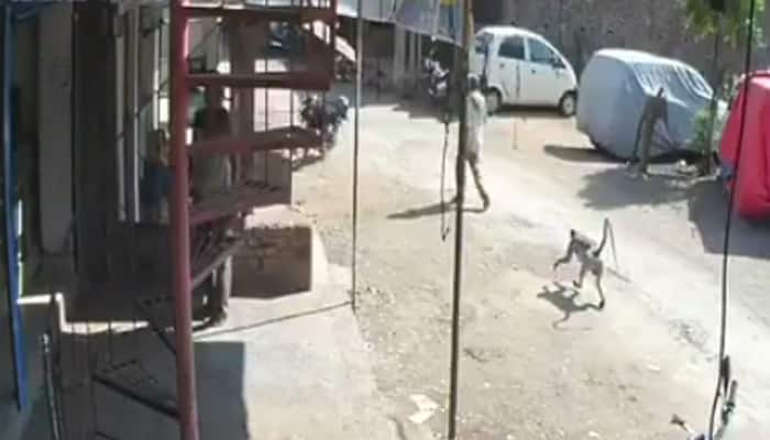 MUST WATCH: Langoor involved in a hit-and-run!