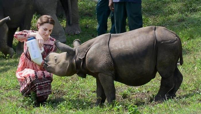 Rhino killed in Kaziranga National Park post Royal couple's visit