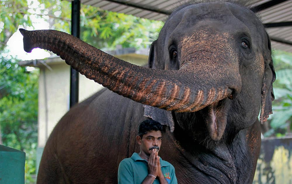 A Sri Lankan zoological garden employee prays before starting a blessing ritual to bless animals by anointing oil to mark the Sinhalese and Tamil traditional New Year in Colombo, Sri Lanka..