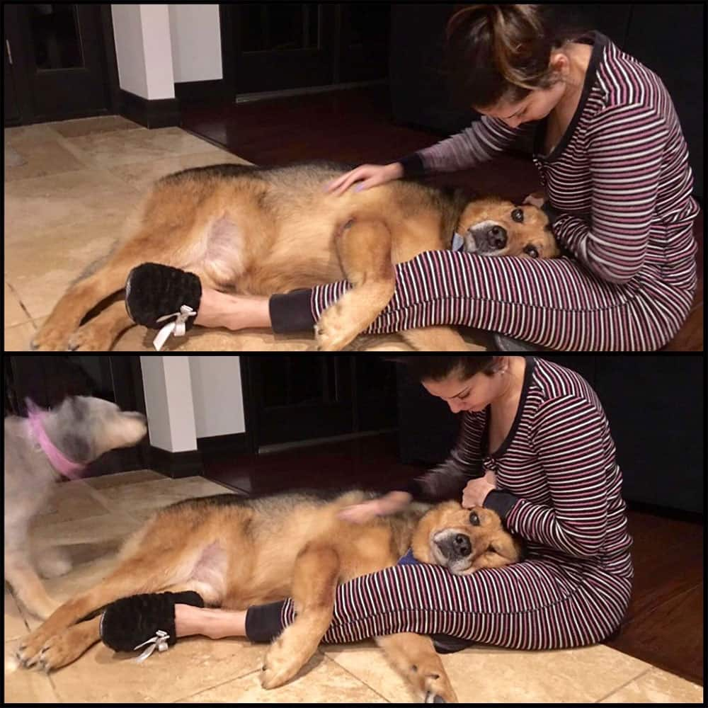 Sunny Leone :- Exactly how I want to spend my morning!! On the floor with my boy Chopper who wants to lay in my lap!Love this cutie -twitter