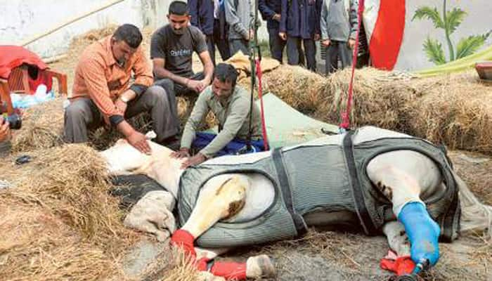 Shaktiman - Life and Times of the brave police horse