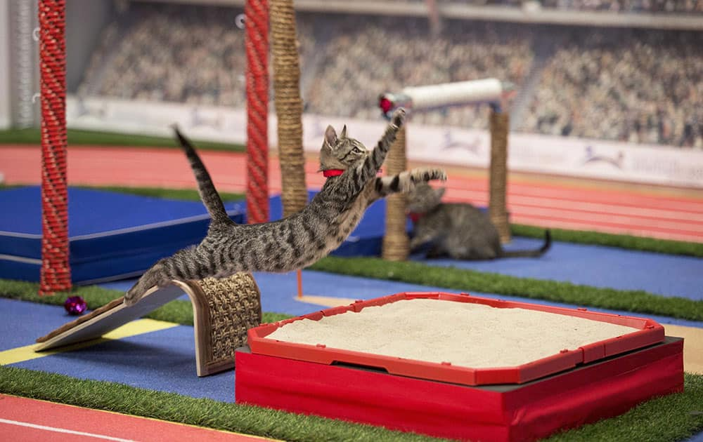 a cat takes part in the long jump event in Hallmark Olympic Stadium during the taping of the Hallmark Channels Kitten Summer Games in New York.