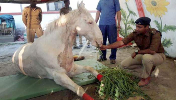 Tribute to Shaktiman: Petrol pump in Dehradun to be named after police horse