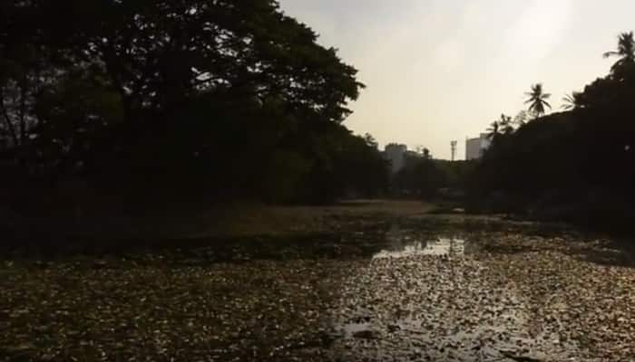 SHOCKING: Thousands of fish are floating dead in Bengaluru lake - Watch to know why