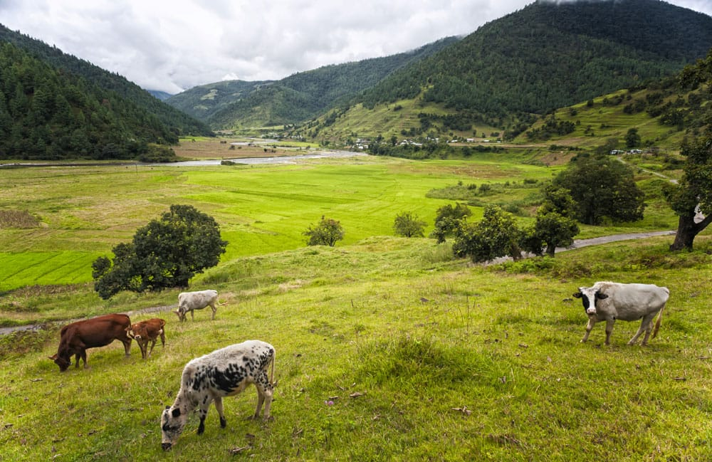 The lush green Sangti Valley.