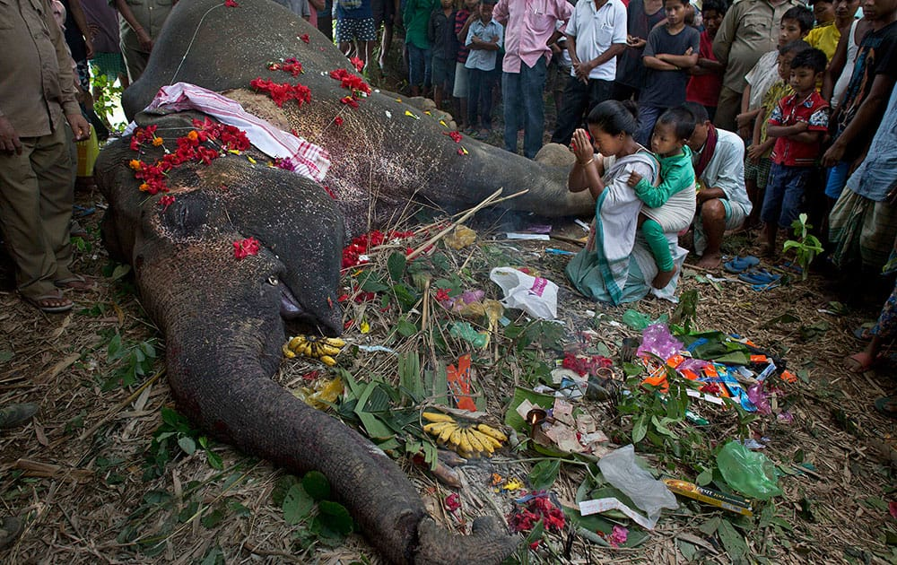 A woman offers prayers to a wild Asiatic male elephant lying dead in Chakrapani village, west of Gauhati, India.