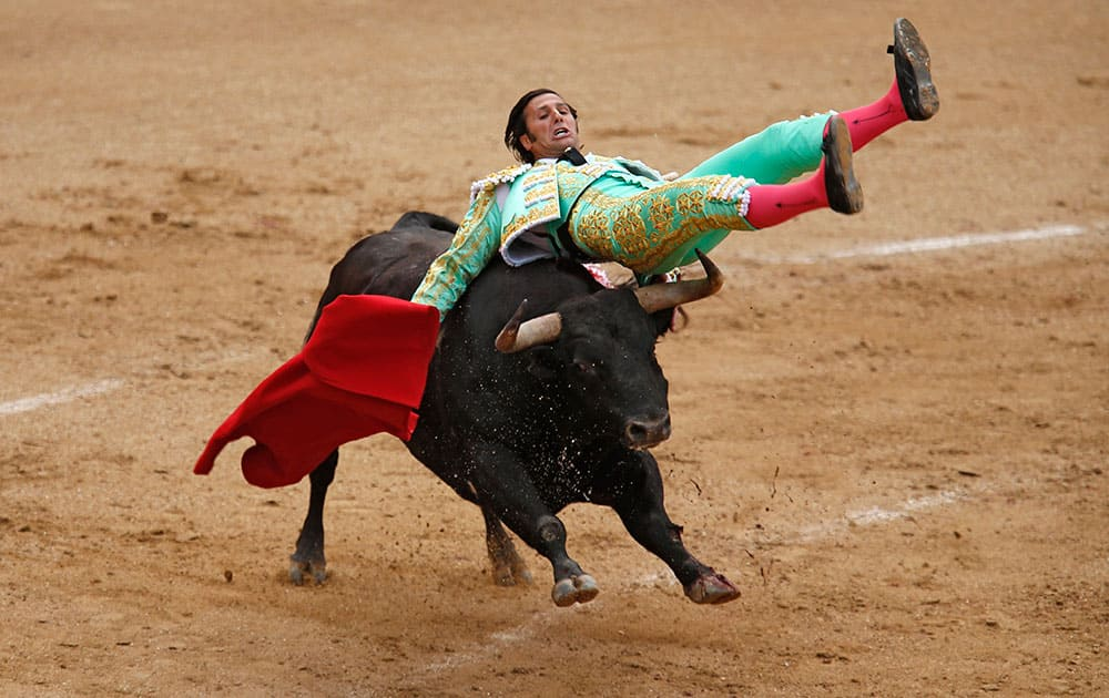 Spanish bullfighter David Mora is tossed by an Alcurrucen ranch's fighting bull during a bullfight at the Las Ventas bullring in Madrid, Spain.